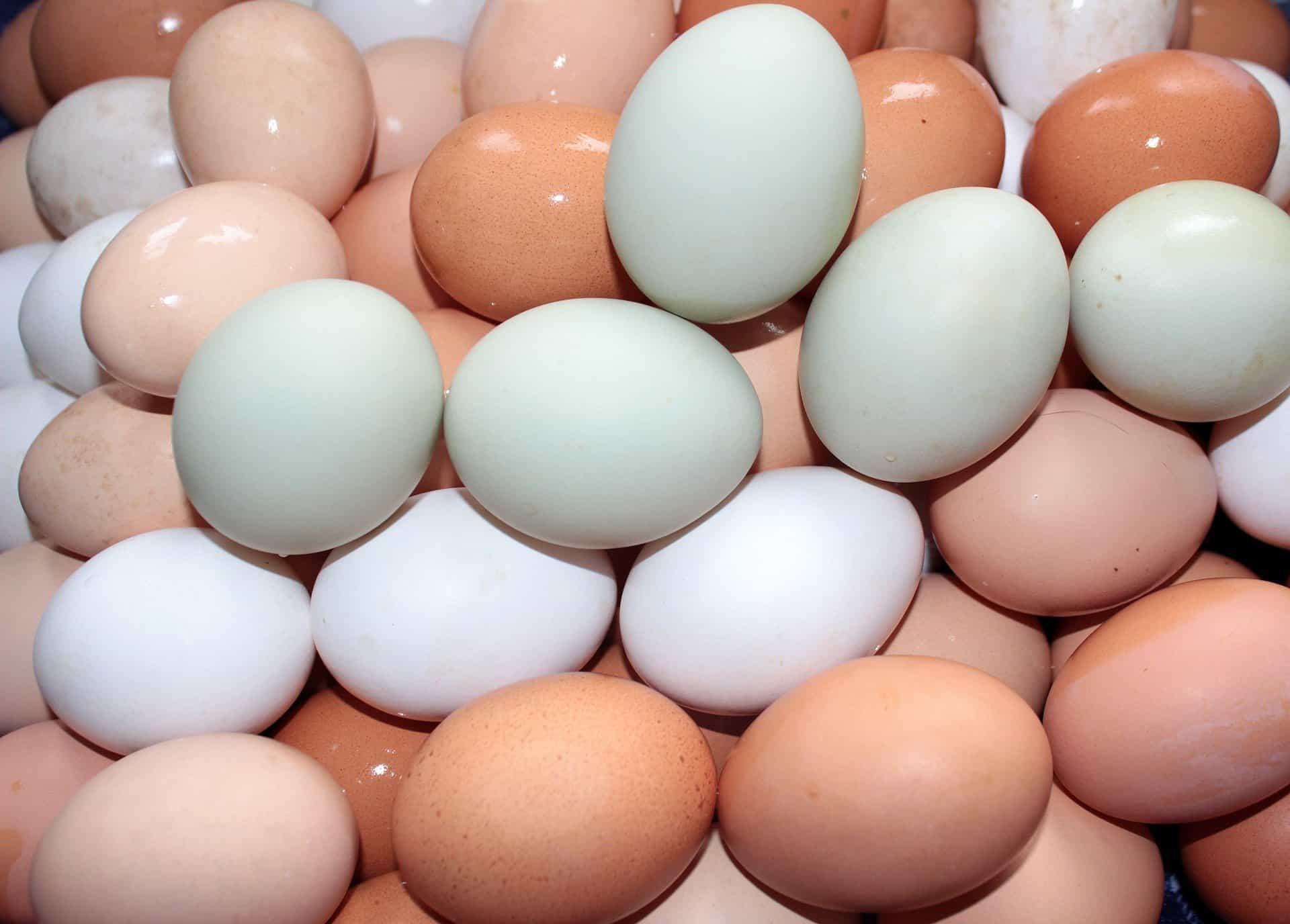 Eggs make you feel full longer