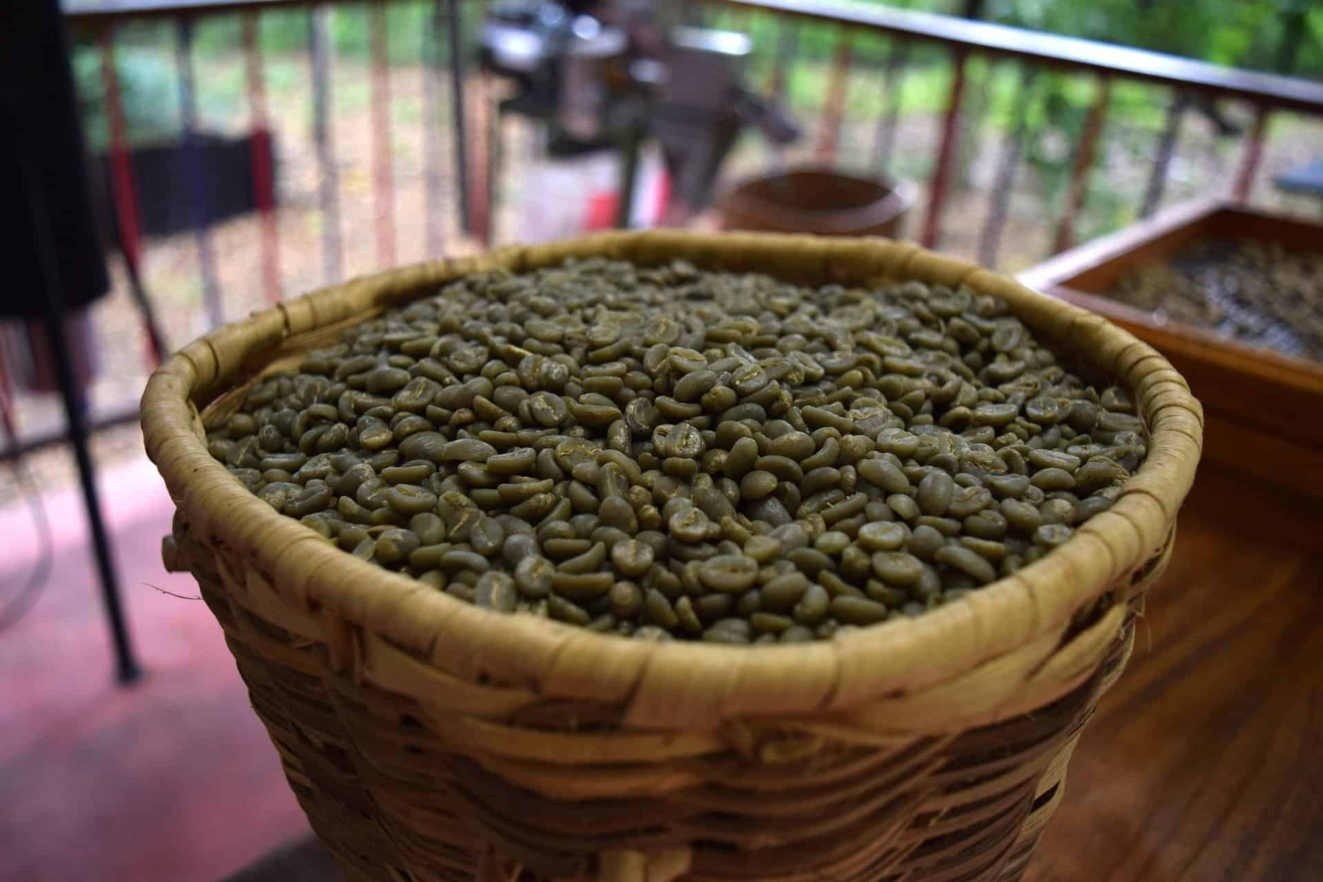 Can You Eat Green Coffee Beans